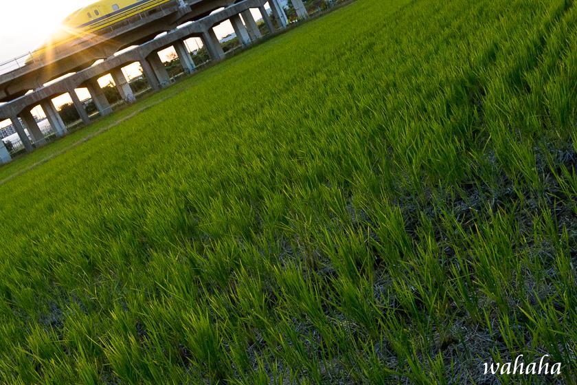 301029kanagasaki_dy.jpg