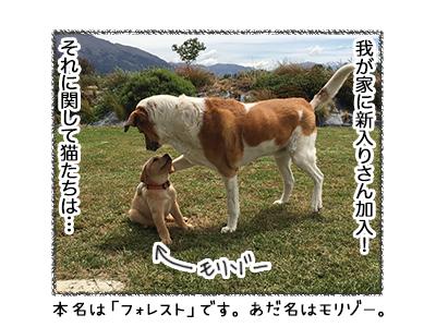 02012019_cat1.jpg