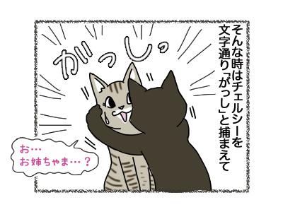02102018_cat4.jpg
