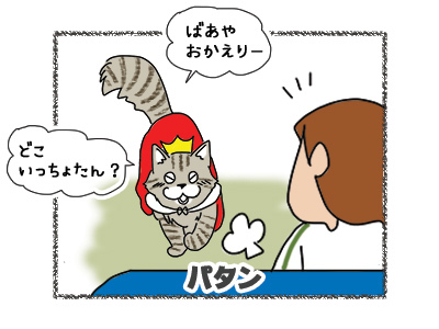 02112018_cat1.jpg