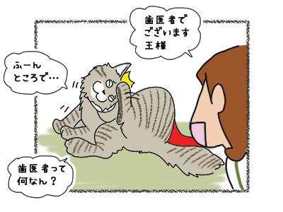 02112018_cat2.jpg
