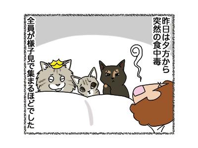 03102018_cat1.jpg