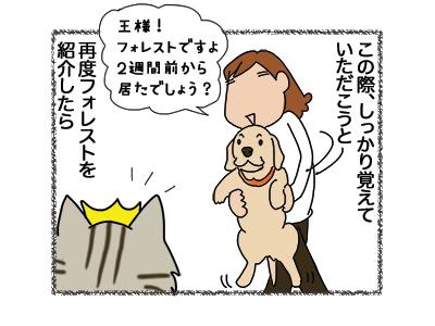 04012019_cat2.jpg