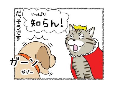 04012019_cat4.jpg