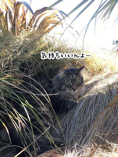 05102018_cat5.jpg