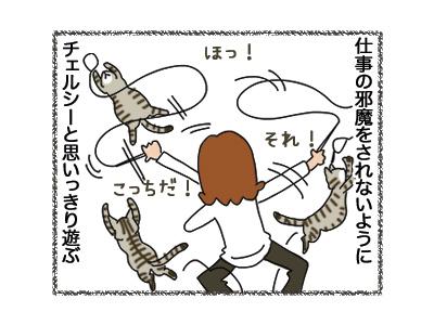 06112018_cat1.jpg