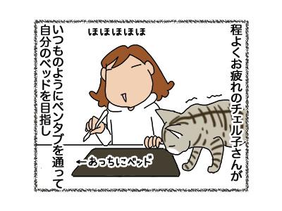 06112018_cat3.jpg