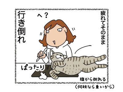 06112018_cat4.jpg