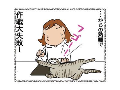 06112018_cat5.jpg