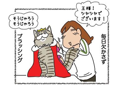 07012019_cat2.jpg