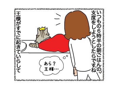 07112018_cat2.jpg