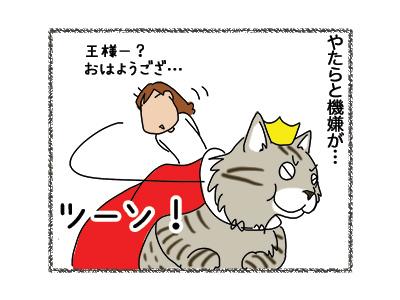 07112018_cat3.jpg