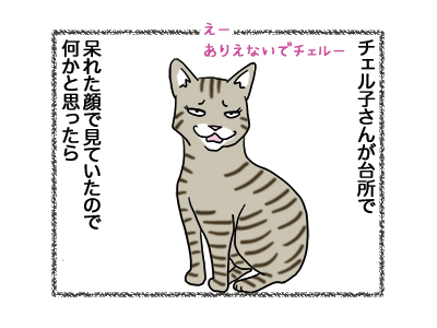 08012019_cat1.jpg