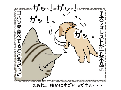 08012019_cat2.jpg