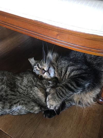 08112018_cat4.jpg