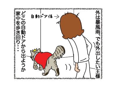 09112018_cat1.jpg