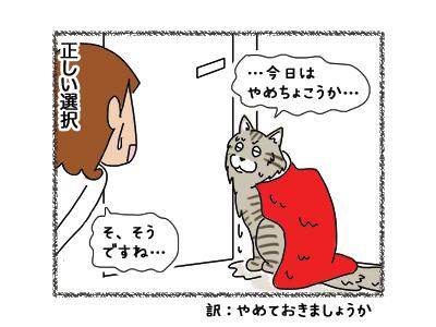 09112018_cat6.jpg