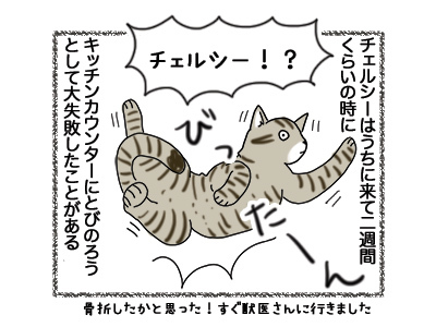 11102018_cat1.jpg