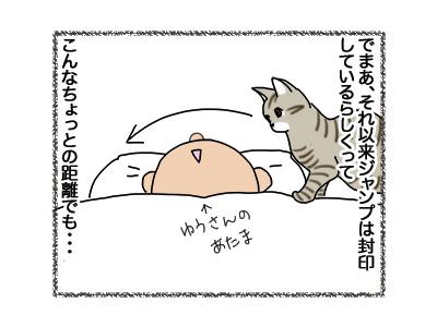 11102018_cat2.jpg