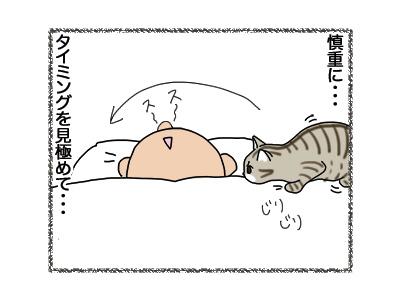11102018_cat3.jpg