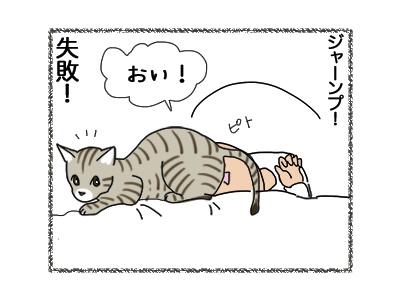 11102018_cat4.jpg
