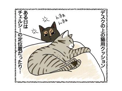 12102018_cat1.jpg