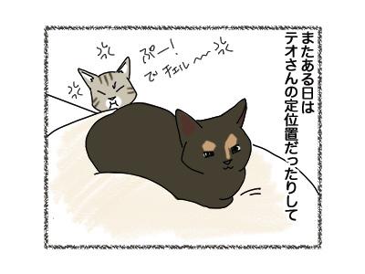 12102018_cat2.jpg