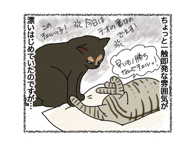 12102018_cat3.jpg