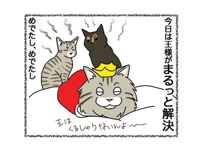12102018_cat4.jpg