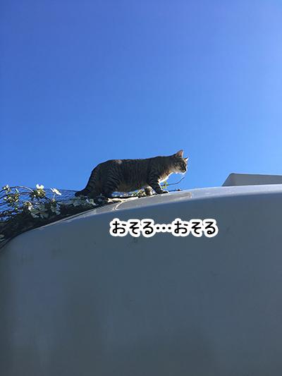12112018_catpic4.jpg