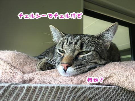 14012019_cat1.jpg