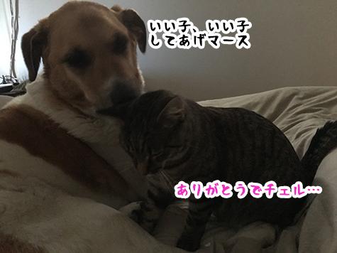 14012019_cat3.jpg