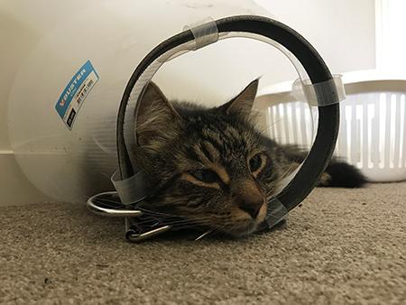 14122018_cat4.jpg