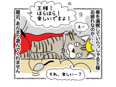 15102018_cat1.jpg