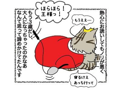 15102018_cat2.jpg