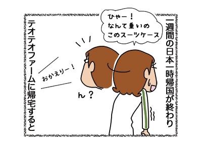 15122018_cat1.jpg