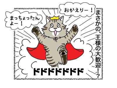 15122018_cat2.jpg