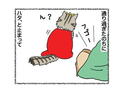 17012019_cat2.jpg