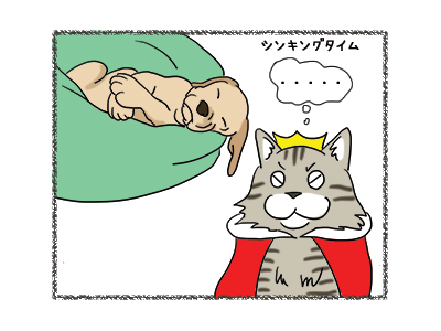 17012019_cat6.jpg