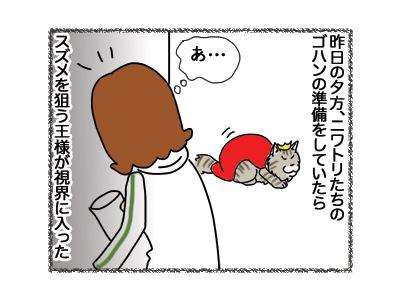 17102018_cat1.jpg