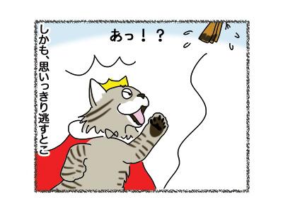 17102018_cat2.jpg