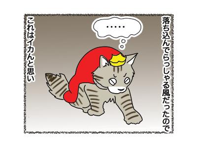 17102018_cat3.jpg