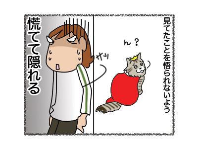 17102018_cat4mini.jpg