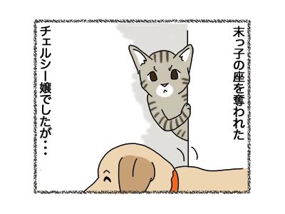 18012019_cat1.jpg