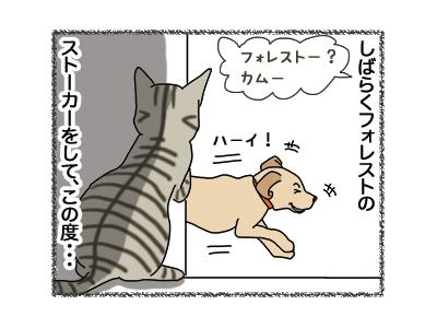 18012019_cat2.jpg