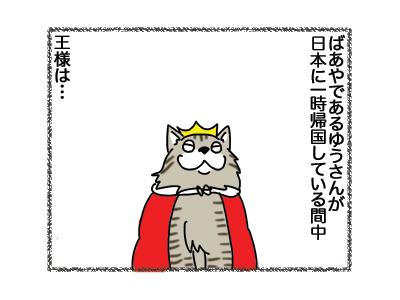 18122018_cat1.jpg