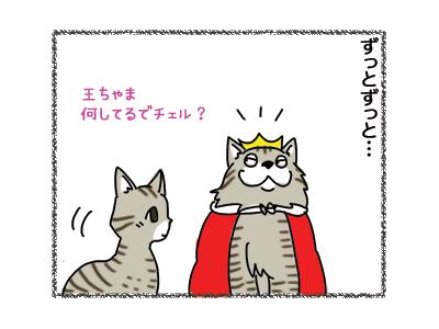 18122018_cat2.jpg