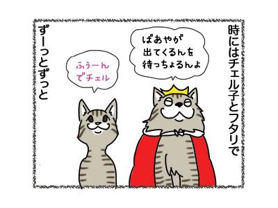 18122018_cat3.jpg