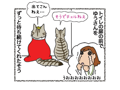 18122018_cat4.jpg