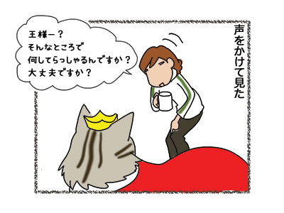 19102018_cat2.jpg
